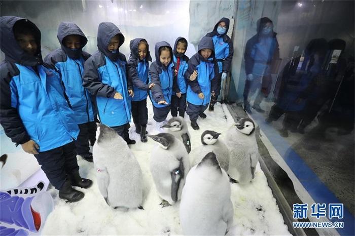 小学生零距离接触帝企鹅