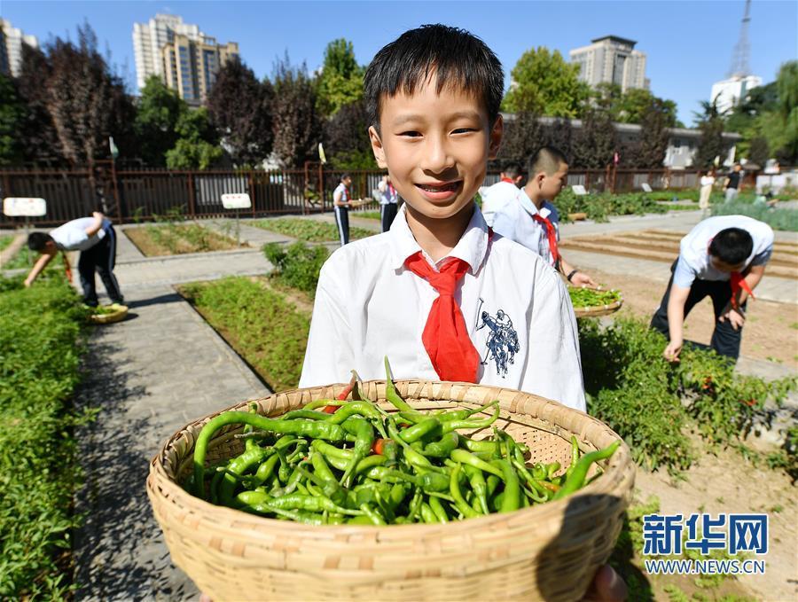 (教育)(4)西安:农耕体验迎开学