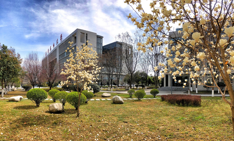 西安石油大学:枝头春意闹 花开满枝桠