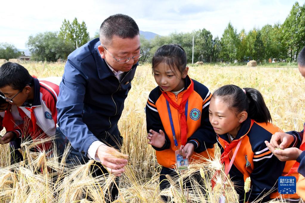西藏:青稞地里的思政课